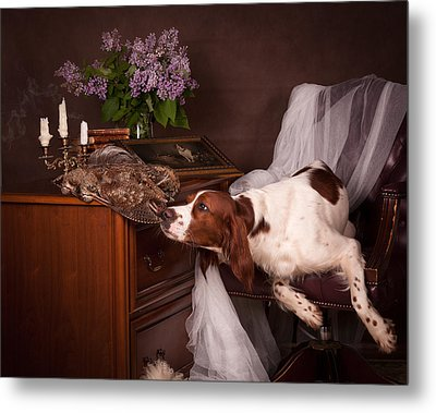 Young Setter With Lilac... Metal Print