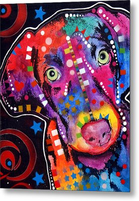 Young Weimaraner Metal Print by Dean Russo
