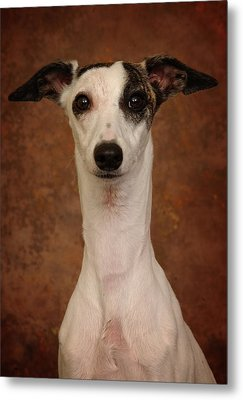 Metal Print featuring the photograph Young Whippet by Greg Mimbs