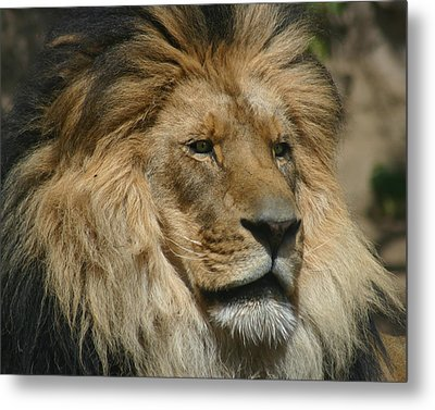 Your Majesty Metal Print by Anthony Jones