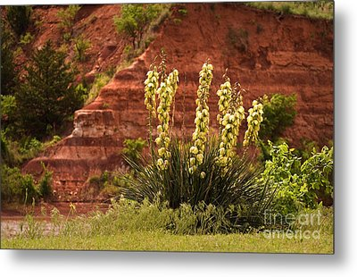 Yucca Plant At Great Salt Plains Lake Oklahoma Metal Print