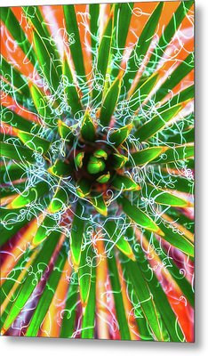 Yucca Sunrise Metal Print by Darren White