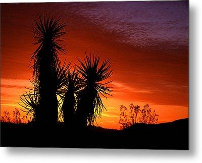 Yucca Sunrise Metal Print by Eric Foltz