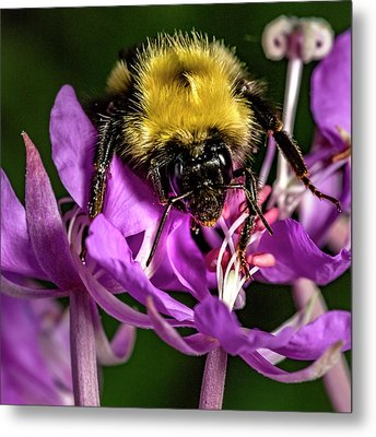 Metal Print featuring the photograph Yummy Pollen by Darcy Michaelchuk