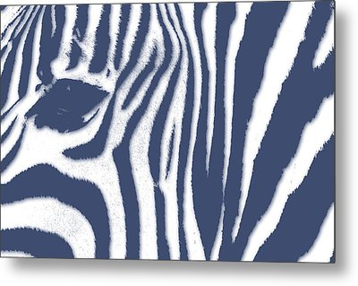 Zebra 2 Metal Print by Joe Hamilton