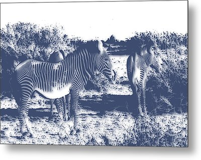 Zebra 4 Metal Print by Joe Hamilton