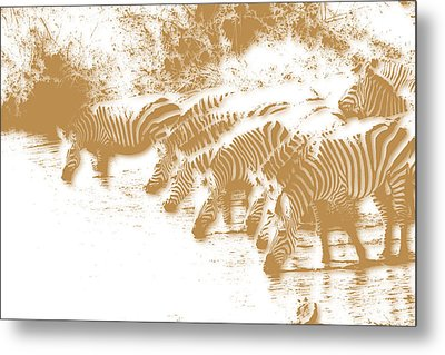 Zebra 6 Metal Print by Joe Hamilton