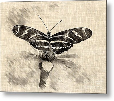 Zebra Butterfly Sketch Metal Print