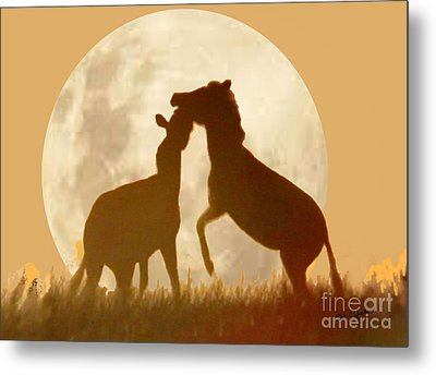 Zebra Full Moon Silhouettes  Metal Print by Dale Jackson
