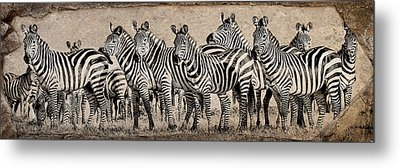 Metal Print featuring the photograph Zebra Herd Rock Texture Blend Wide by Mike Gaudaur