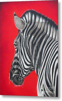 zebra in African sun Metal Print by Ilse Kleyn
