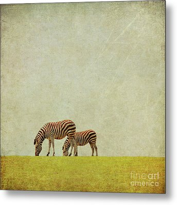 Zebra Metal Print by Lyn Randle