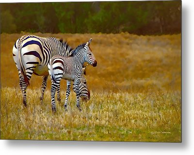 Zebra Mom And Foal Metal Print by Dyle   Warren
