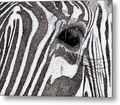 Zebra Portrait Metal Print by Karl Addison