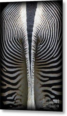 Zebra Stripes Metal Print by Heiko Koehrer-Wagner
