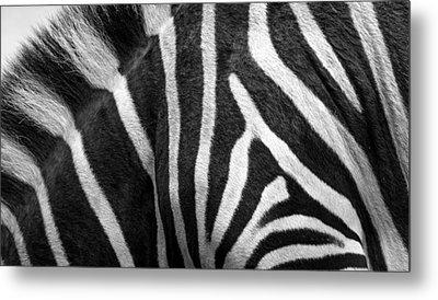 Zebra Stripes Metal Print by Racheal  Christian