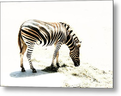 Zebra Stripes Metal Print by Stephen Mitchell