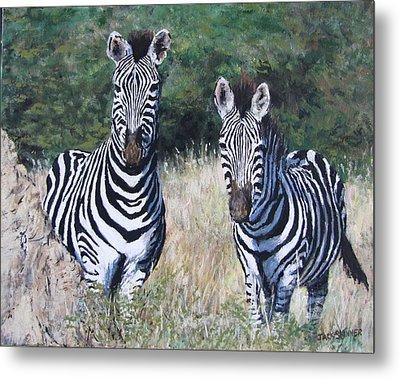 Zebras In South Africa Metal Print