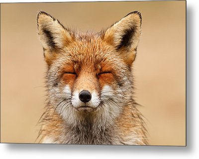 Zen Fox Red Fox Portrait Metal Print by Roeselien Raimond