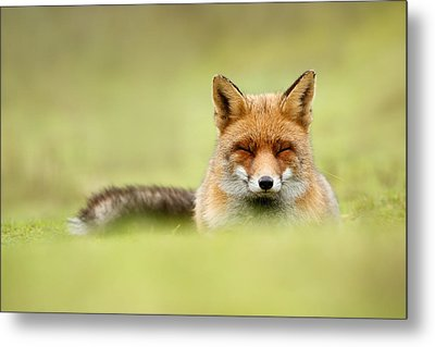 Zen Fox Series - Zen Fox In A Sea Of Green Metal Print by Roeselien Raimond