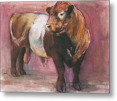 Zeus  Red Belted Galloway Bull Metal Print by Mark Adlington