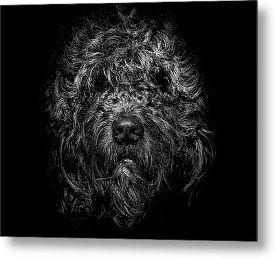 Metal Print featuring the photograph Ziggy Portrait No 1 by Brian Carson