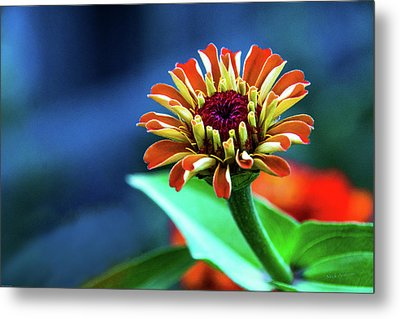 Zinnia Ascending Metal Print by Mick Anderson