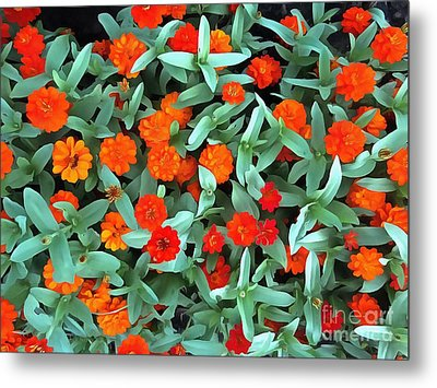 Metal Print featuring the photograph Zinnia Flower - Profusion Orange by Janine Riley