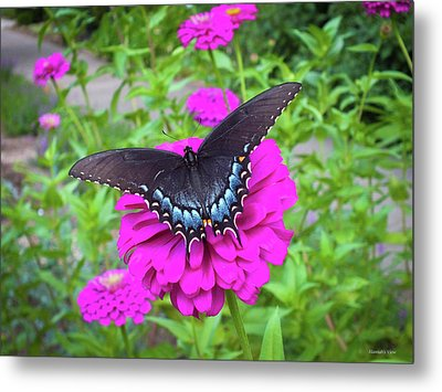 Zinnia Land Metal Print