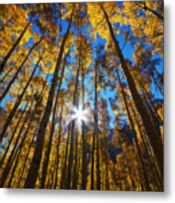 Autumn Aspens Metal Print by Kate Avery