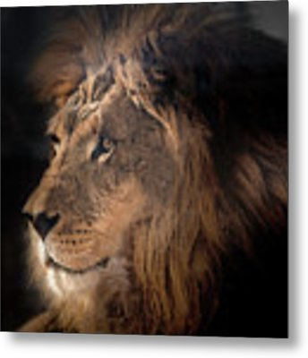 Lion King Of The Jungle Metal Print by James Sage