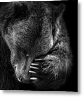 Portrait Of Bear In Black And White Metal Print