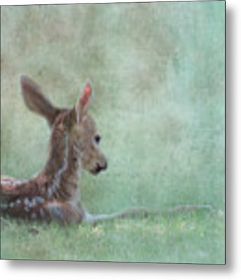 Tranquil Metal Print by Sally Banfill