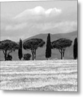 Tuscany Trees Metal Print by Julian Perry