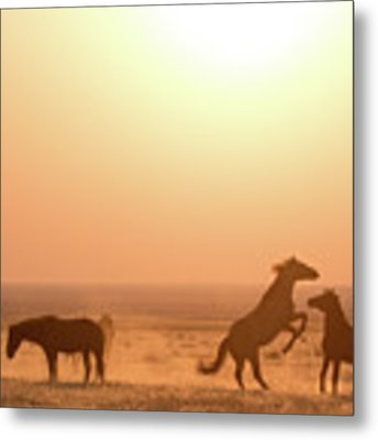 Wild Horse Sunset Metal Print by Wesley Aston