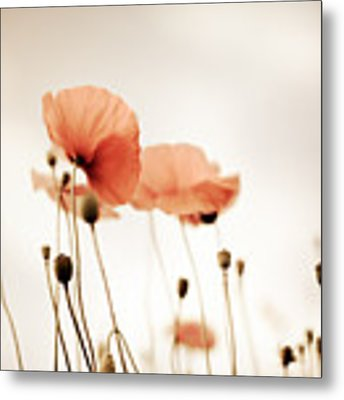 Corn Poppy Flowers Metal Print by Nailia Schwarz