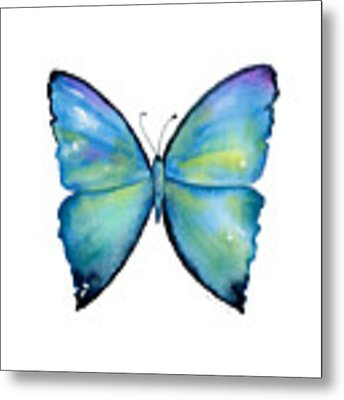 2 Morpho Aega Butterfly Metal Print by Amy Kirkpatrick