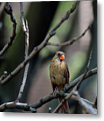 A View From The Tree Tops  Metal Print by Patricia Youngquist