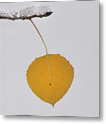 Alone In The Snow Metal Print by Ron Cline
