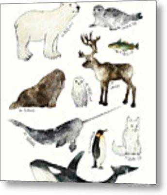 Arctic And Antarctic Animals Metal Print