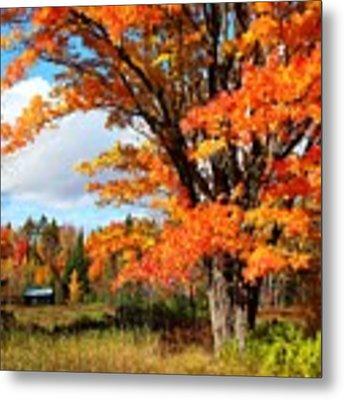 Autumn Glory Metal Print by Gigi Dequanne