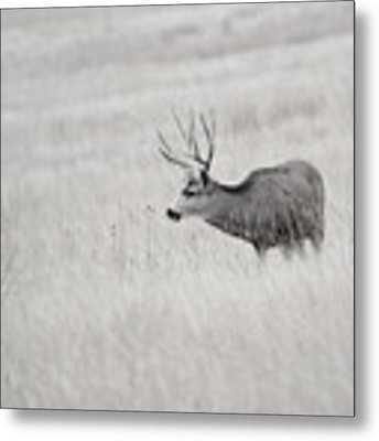 Awatoyi Metal Print by Philip Rodgers
