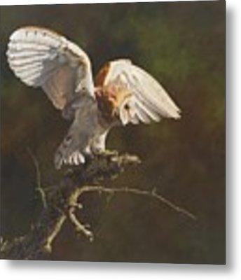 Barn Owl Metal Print by Alan M Hunt