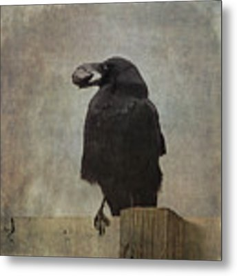 Beware Of Crows Metal Print by Sally Banfill