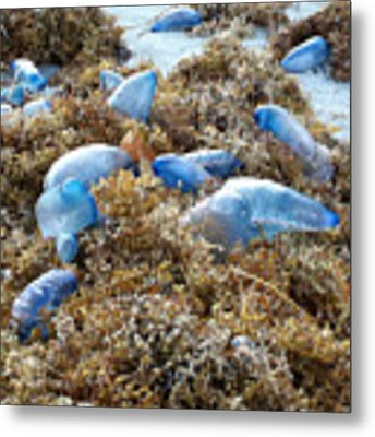 Seeing Blue At The Beach Metal Print by Karen Zuk Rosenblatt