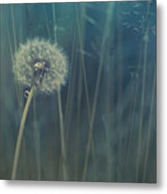 Blue Tinted Metal Print by Priska Wettstein