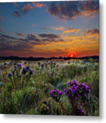 Bonnie's Meadow Metal Print