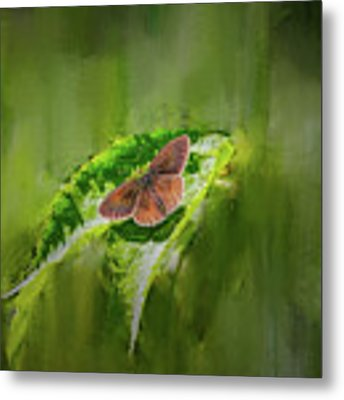 Brown Butterfly #h6 Metal Print by Leif Sohlman