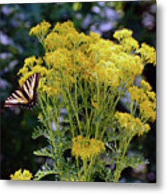 Butterfly At Wilson Creek #2 Metal Print by Ben Upham III