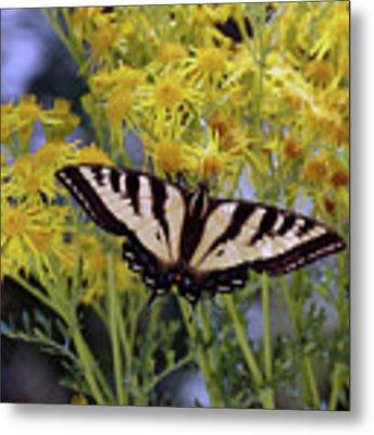 Butterfly At Wilson Creek #3 Metal Print by Ben Upham III